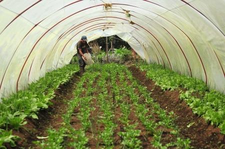 Comunidad Cipreses de Oreamuno  aqui existe una asociacion de productores organicos  de la  zona norte de Cartago (APROZONOC) que reune a un grupo de peque–os parceleros  los cuales aplican  un concepto de fincas sostenibles  donde todo se aprovecha todo incluso los desechos ,el due–o de la finca visitada es  Alvaro Castro   (con Sombrero) cuenta con la ayuda de su hijo Maurcio  (camisa Gris)  y otro joven  Fco Brenes ( camisa oscura ,gorra azul)y entre ellos sacan adelante  el proyecto amigable con el ambiente ,aqui ademas de la agricultura encontramos explotacion de animales  y su estiercol ,incluso hay un biodigestor  productor de gas propano  para cocinar                 Foto Mario Rojas/la nacion 09 Set 2010